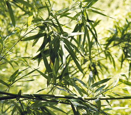Bambusprodukte